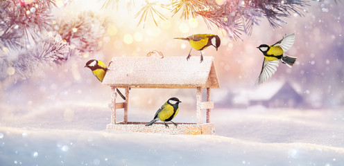 Christmas Card with Birds. Winter Landscape