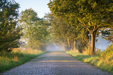 Empty rural road during a foggy, autumn morning in the Dutch countryside.