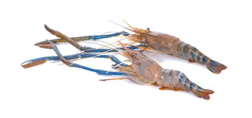Fresh shrimp,prawn isolated on white background