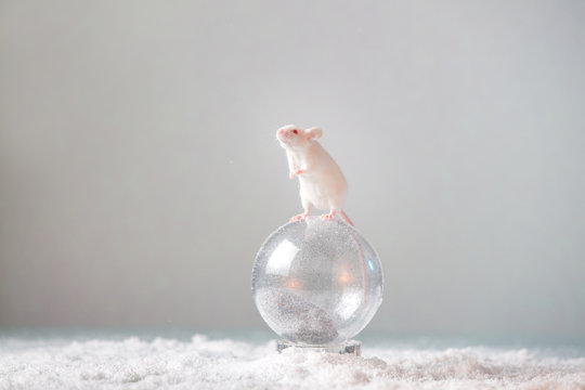 One white mouse stands on a New Year's transparent ball in the snow. Symbol  of New Year 2020 of the rat, mouse on the Chinese calendar