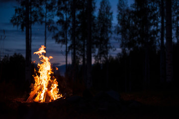 Burning campfire on a dark night in a forest. Twilight sky and trees in the background.