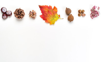 Fall decoration on white background