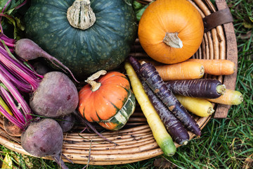 Organic vegetables, colorful carots, red beets, pumpkin, gourd, squash in a basket