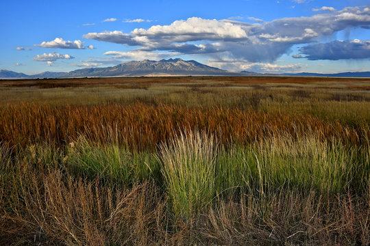 Wild grasses and Reeds in wetlands, Alamosa National Wildlife Refuge, Colorado