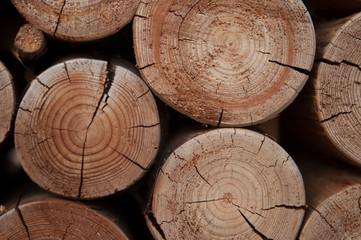 Poster de jardin Texture de bois de chauffage Pile of wood logs stumps for winter