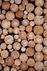 Door stickers Firewood texture Pile of wood logs stumps for winter