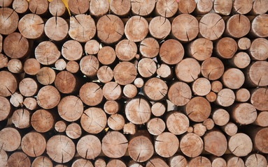 Photo sur Toile Bois Pile of wood logs stumps for winter
