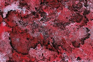france; hautes pyrénées : lichen on rock, bellevue plateau