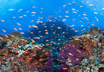 Colorful coral reef with many fishes and corals.Super wide banner