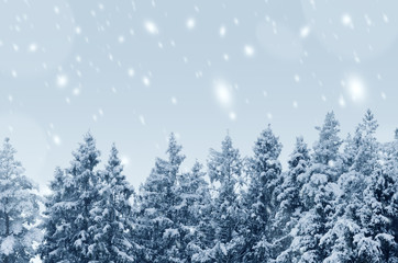 Coniferous forest covered with snow landscape backdrop. Winter season wild nature scenery. Snowy...