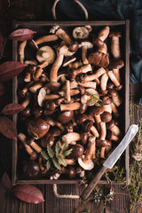 Wooden tray full of mushrooms. Brown bolete in a forest arrangement on a rustic background.