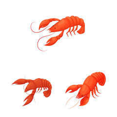 Isolated object of shrimp and crab sign. Set of shrimp and sea vector icon for stock.