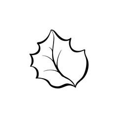 Christmas plant leaf hand drawn illustration. Winter forest flora, evergreen shrub foliage colouring picture. December holidays, xmas monochrome symbol. Natural herbarium decorative design element