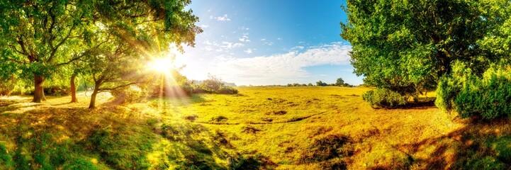 Canvas Prints Honey Wunderschöne, verträumte, herbstliche Landschaft mit weiten Wiesen und großen Eichenbäumen im Licht der aufgehenden Morgensonne