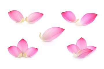 Garden Poster Lotus flower Lotus petal on white background