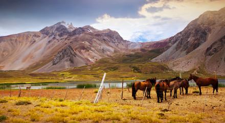 Canvas Prints Honey Andes near Las Lenas