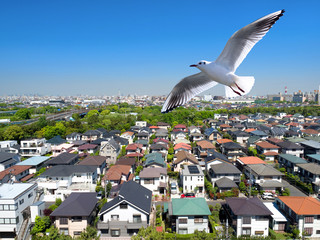 Fototapete - 住宅街を飛ぶカモメ