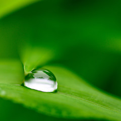 緑の葉の上に留まる朝露