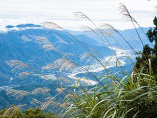 Susuki grass growing at the top of Mount Minobu with panoramic view of Fuji river valley - Yamanashi prefecture, Japan