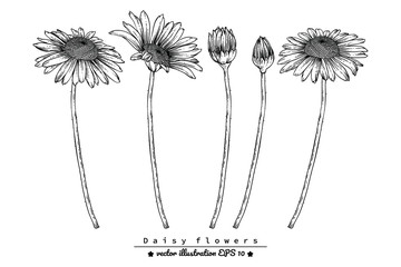 Sketch Floral Botany Collection. Daisy flower drawings. Black and white with line art on white backgrounds. Hand Drawn Botanical Illustrations. Nature Vector. Wall mural