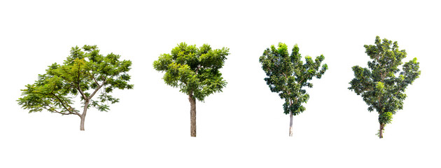 Collections green trees isolated on white background Fototapete