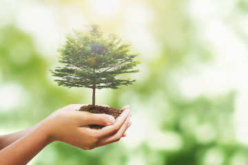 Wall Mural - hand holding tree with sunlight in nature background. concept save world and enevironment earth day