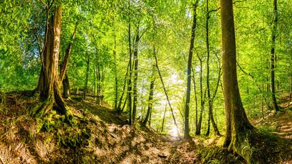 Fototapete - Vom Licht der Sonne durchfluteter Wald wie aus dem Märchen mit zwei alten Bäumen im Vordergrund