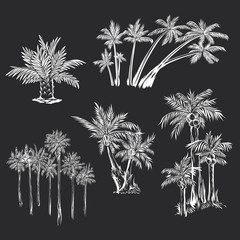 Vector Set of Silhouette Drawings of Palm Trees