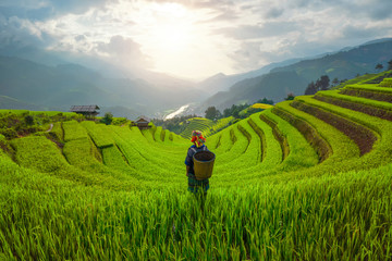 Tuinposter Rijstvelden Tribal woman, farmer, with paddy rice terraces, agricultural fields in countryside of Mu Cang Chai, Yen Bai, mountain hills valley in South East Asia, Vietnam. Nature landscape background.