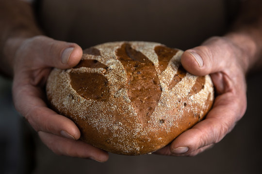 Baker man holding a beautiful loaf of homemade rye fresh bread. Close-up old hands with wrinkles. Concept of harvest with copy space