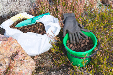 Elk droppings picked in a bag and bucket in the forest