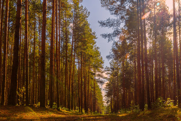 Papiers peints Forets On a sunny forest road.