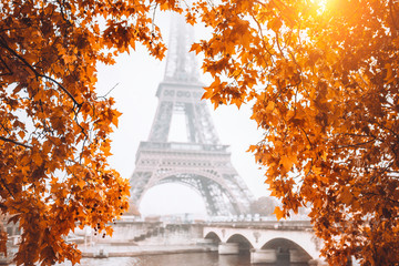 Acrylic Prints Eiffel Tower Autumn view of the Eiffel Tower in Paris through the yellow leaves - a bright sunny flare through the leaves on a cloudy autumn sky
