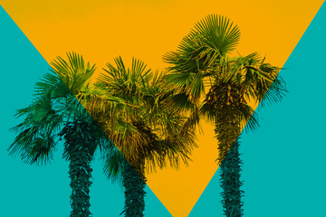 Beautiful abstract three palm tree on a color background.