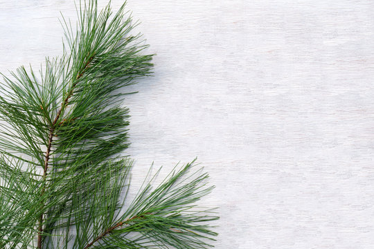 Horizontal flat lay of a sprig of white pine against a white-washed wood background, with copy space