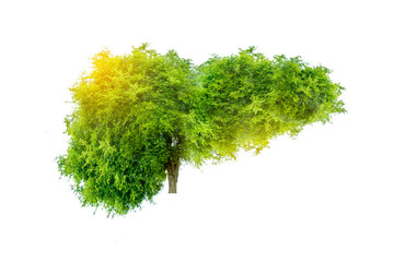 Realistic liver images are human green tree shapes about diseases and cirrhosis (environment). Wall mural