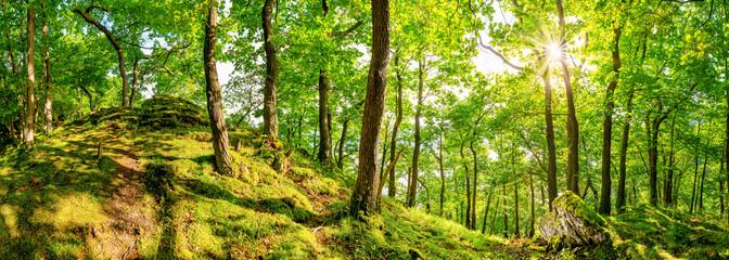 Fototapete - Wunderschöner Wald mit alten Bäumen, einem weißen Felsen im Vordergrund und strahlender Sonne im Hintergrund