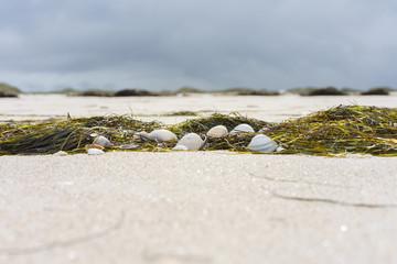 Fototapete - Muscheln am Strand