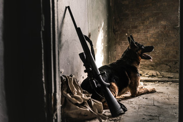 selective focus of  german shepherd dog sitting on floor near gun in abandoned building, post...