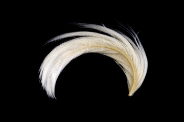 White goose feathers isolated black background. goose feathers and fluff from pillows texture