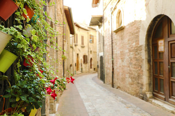 Cozy old Italian street in the heart of Italy. Focus on the plants for background.