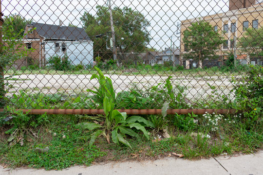 Fence with Plants in front of a Vacant Lot in Logan Square Chicago