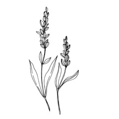 Vector wildflower floral botanical flowers. Black and white engraved ink art. Isolated wildflowers illustration element.
