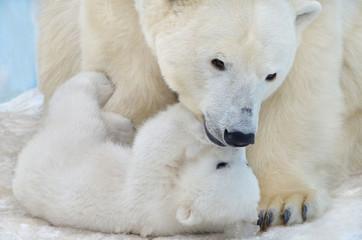 Poster Ijsbeer Polar bear with a teddy bear.