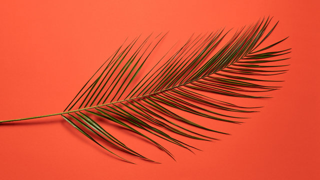 Tropical palm leaf presented on a red background with copy space