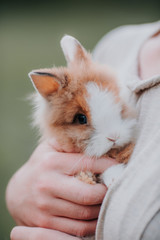 Woman Holding a Fluffy Bunny