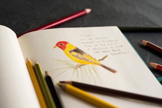 Nature Journal with a Bird