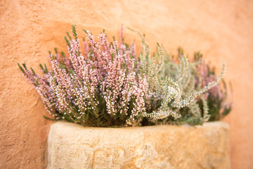Clay pot detail with beautiful Provencal flowers. Roussillon