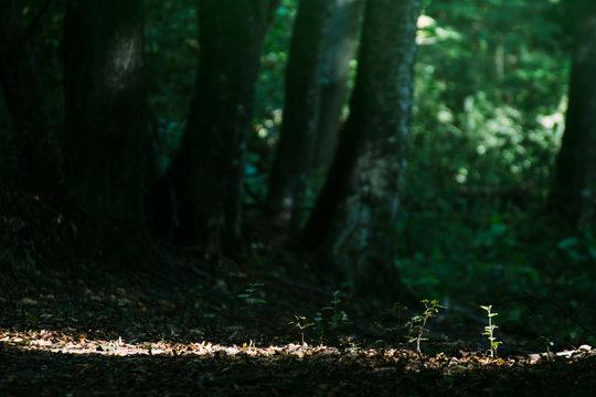 Sprout in dark forest