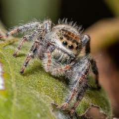 Face to face with a jumping spider